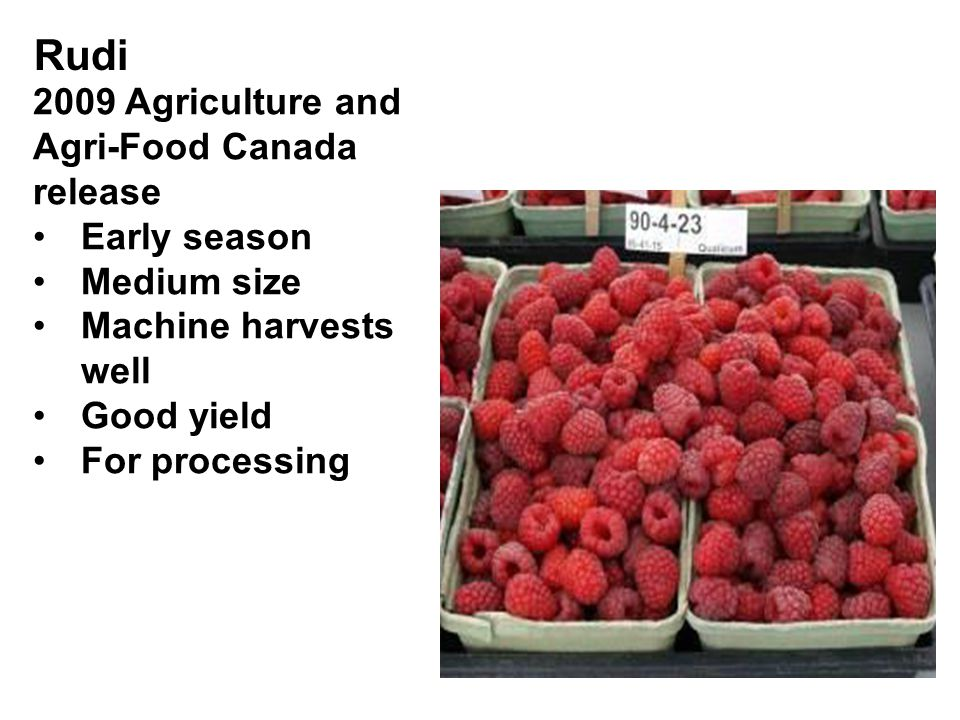Rudi 2009 Agriculture and Agri-Food Canada release Early season