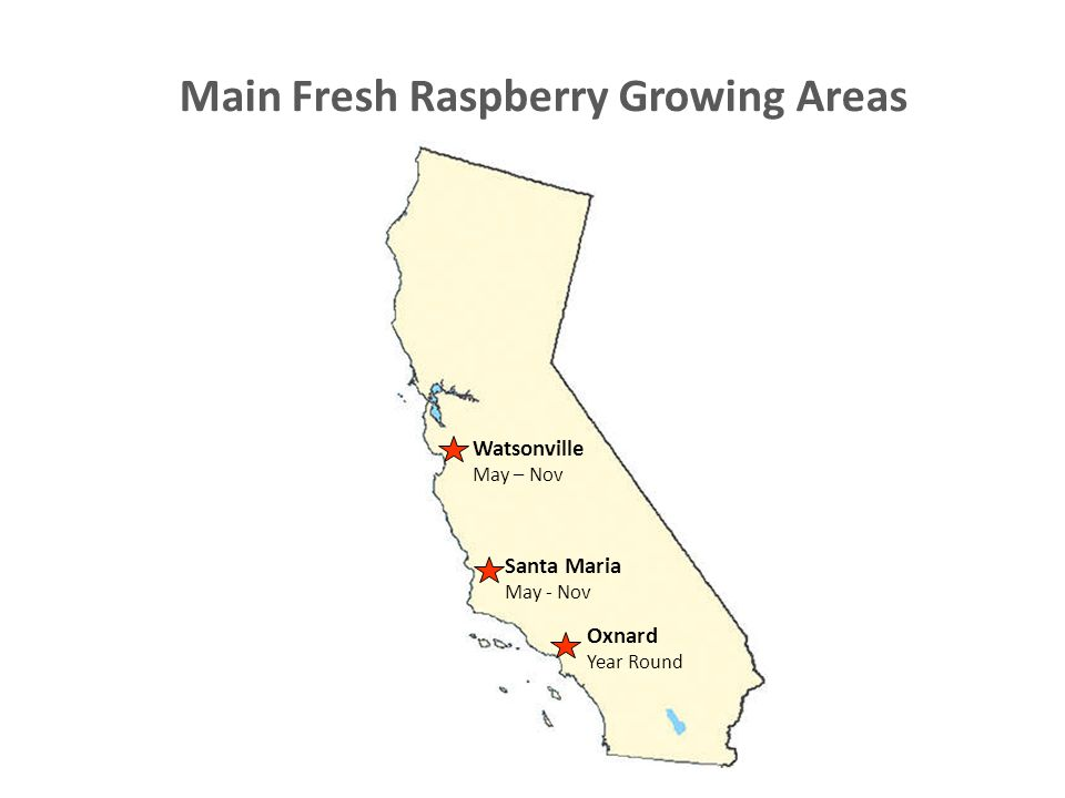 Main Fresh Raspberry Growing Areas