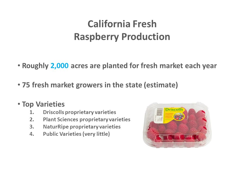 California Fresh Raspberry Production