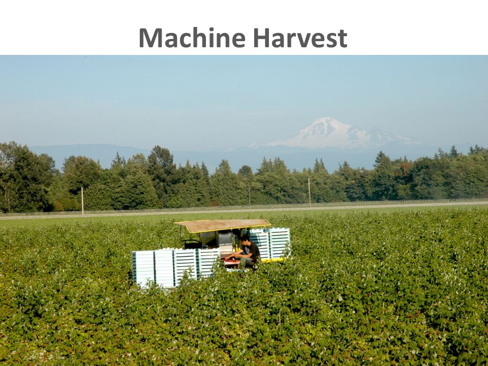 Machine Harvest