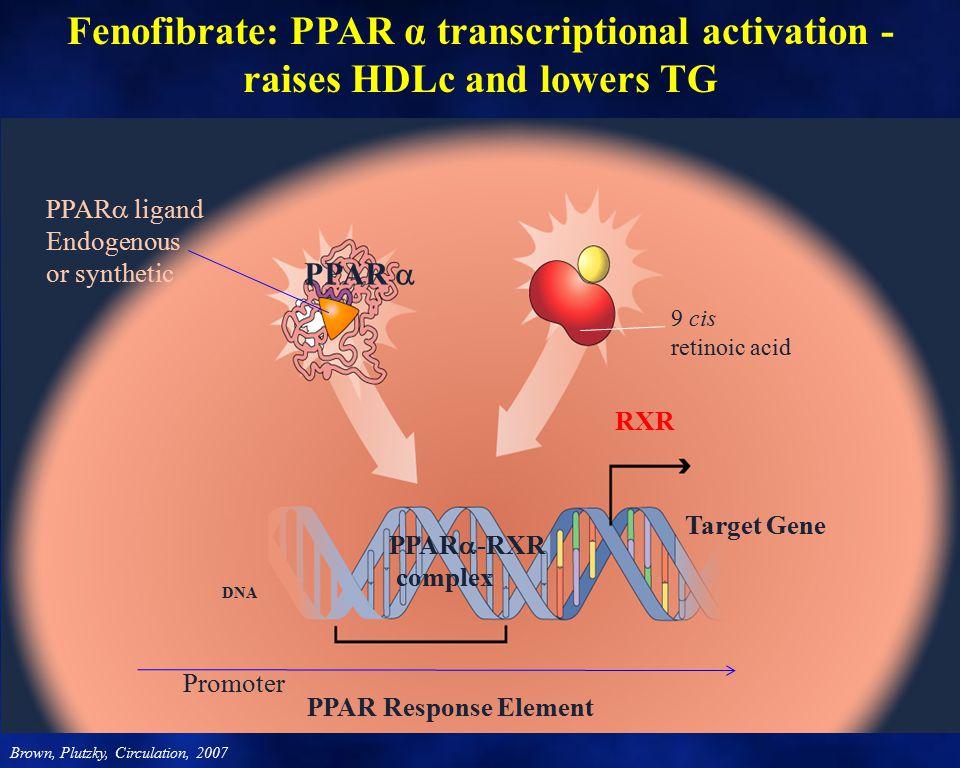 Fenofibrate: PPAR α transcriptional activation -