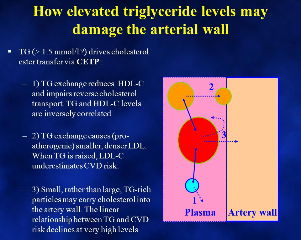 How elevated triglyceride levels may damage the arterial wall