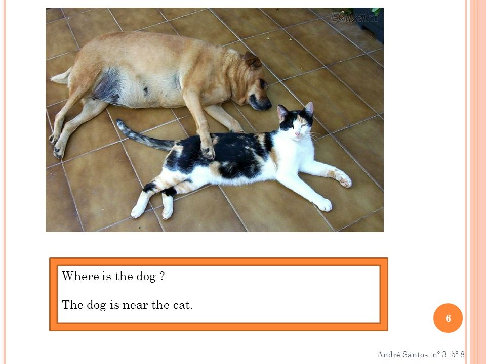 Where is the dog The dog is near the cat. André Santos, nº 3, 5º 8