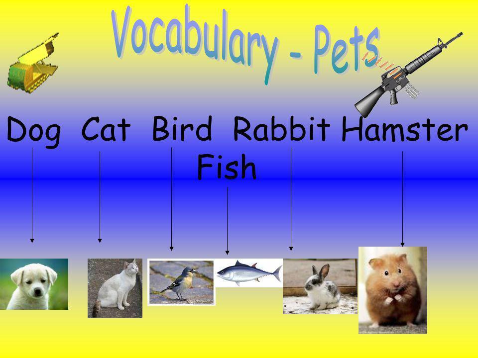 Dog Cat Bird Rabbit Hamster Fish