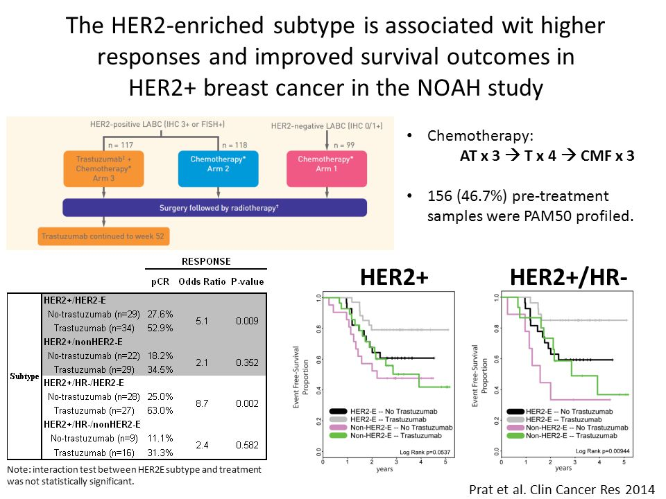 The HER2-enriched subtype is associated wit higher responses and improved survival outcomes in HER2+ breast cancer in the NOAH study