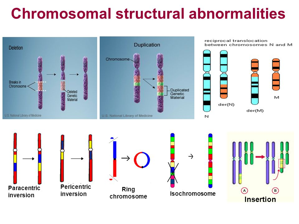 Chromosomal structural abnormalities