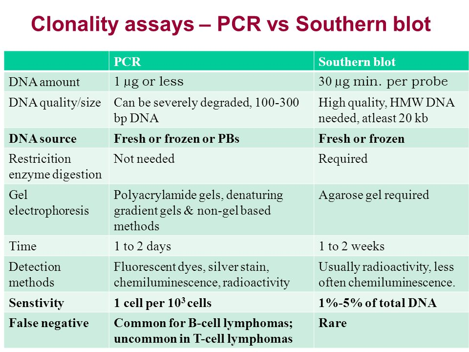Clonality assays – PCR vs Southern blot