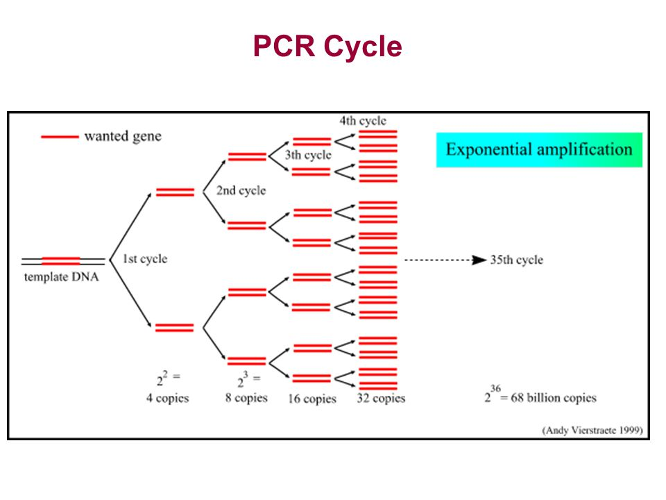 PCR Cycle