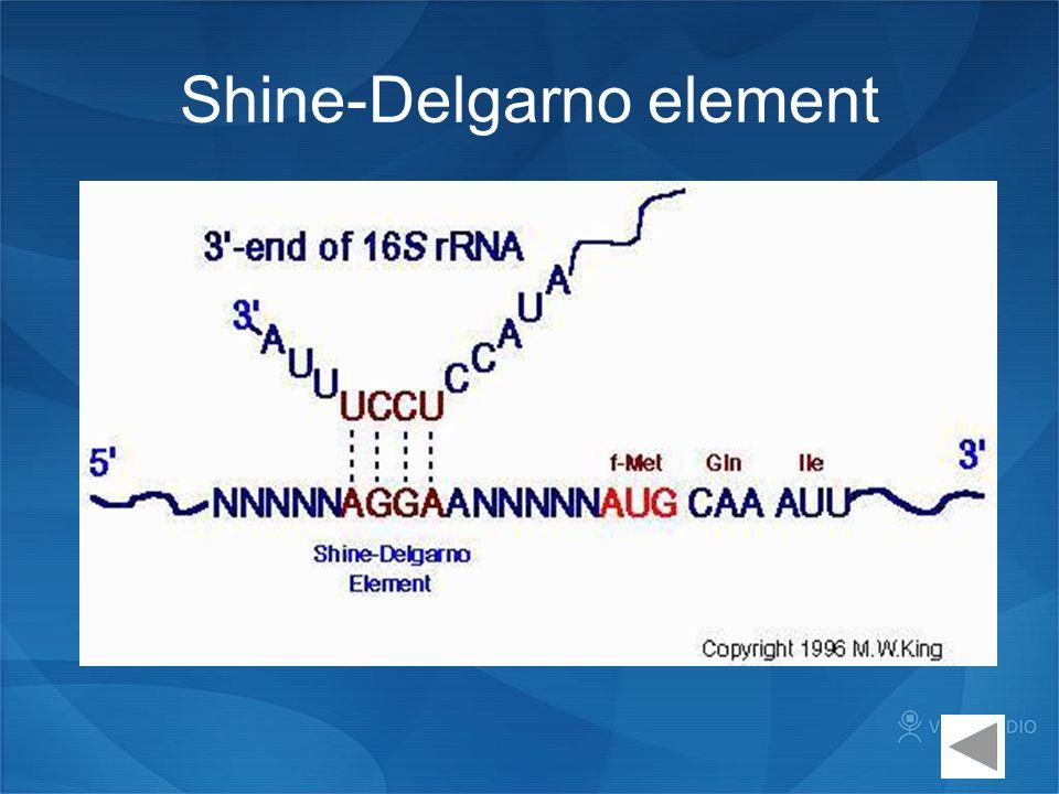 Shine-Delgarno element