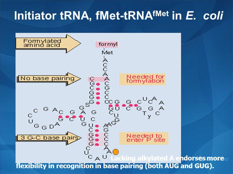 Initiator tRNA, fMet-tRNAfMet in E. coli