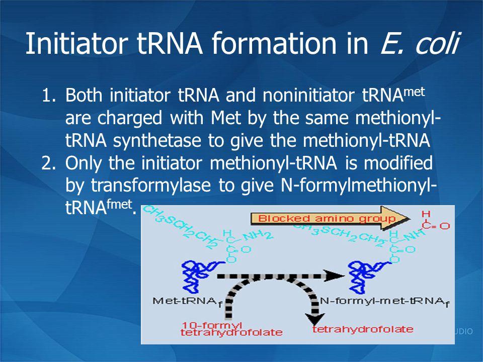 Initiator tRNA formation in E. coli