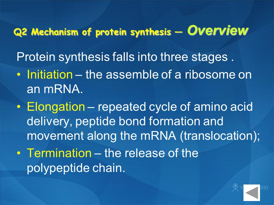 Q2 Mechanism of protein synthesis — Overview