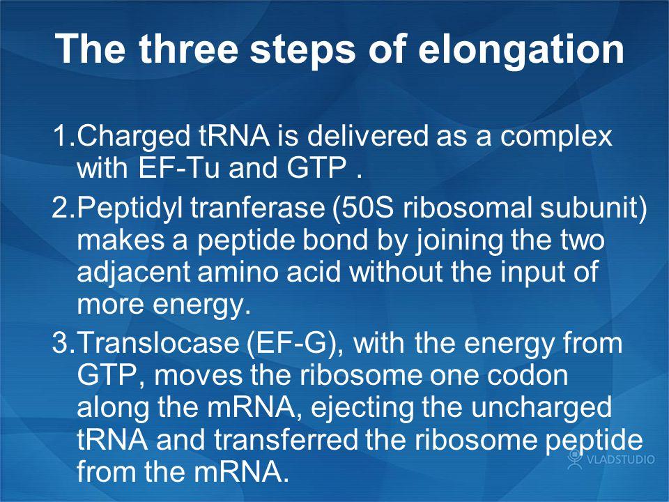 The three steps of elongation