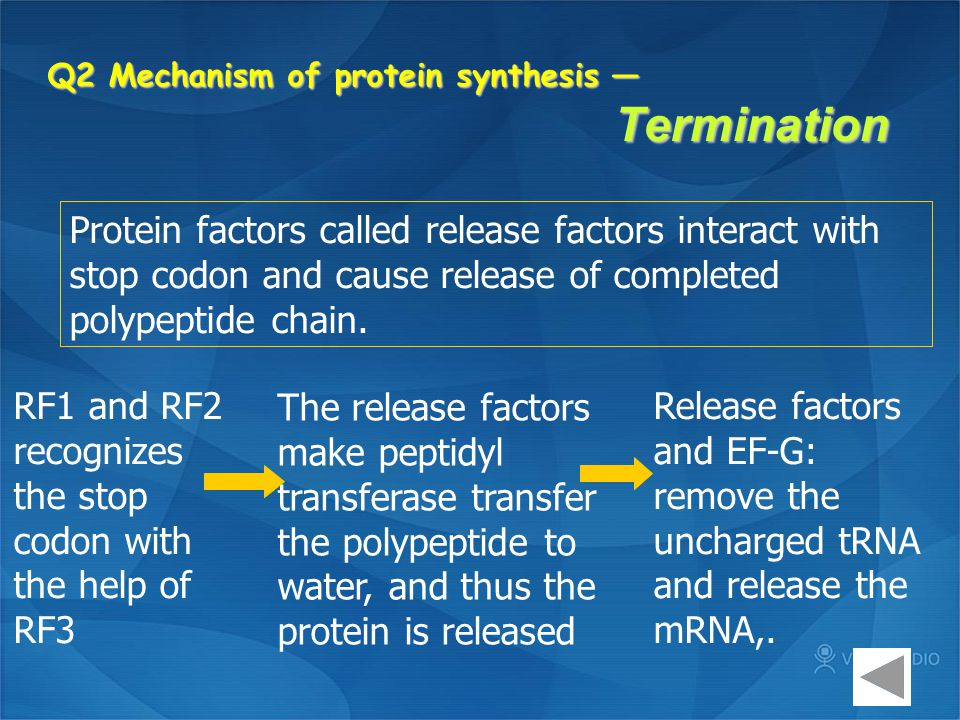 Q2 Mechanism of protein synthesis — Termination