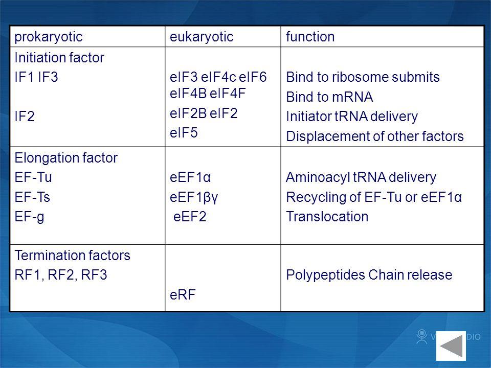 prokaryotic eukaryotic. function. Initiation factor. IF1 IF3. IF2. eIF3 eIF4c eIF6 eIF4B eIF4F.