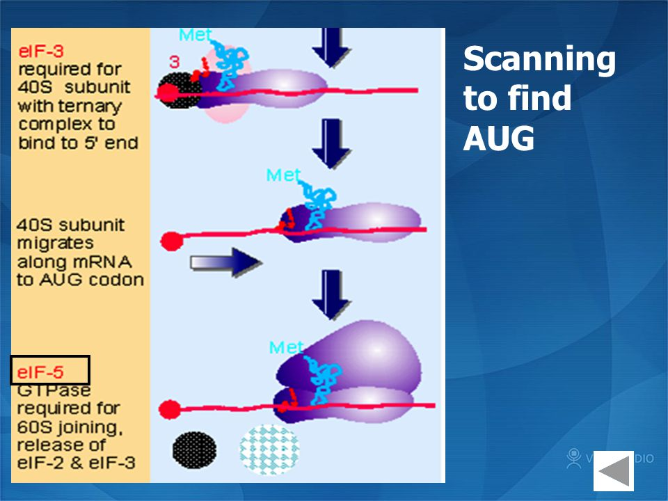 Scanning to find AUG