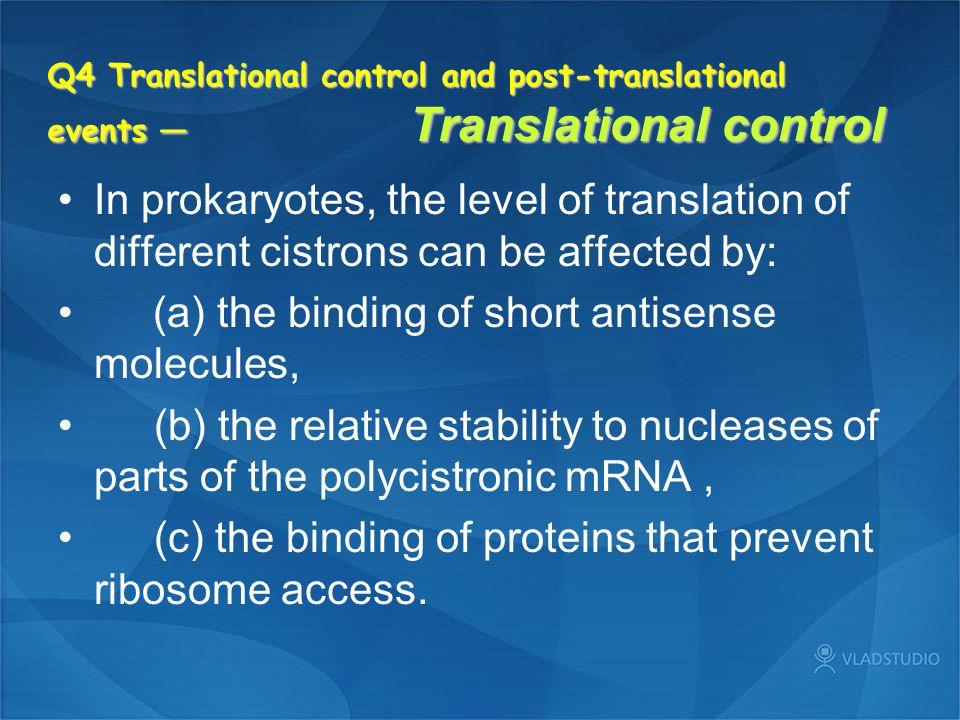 (a) the binding of short antisense molecules,