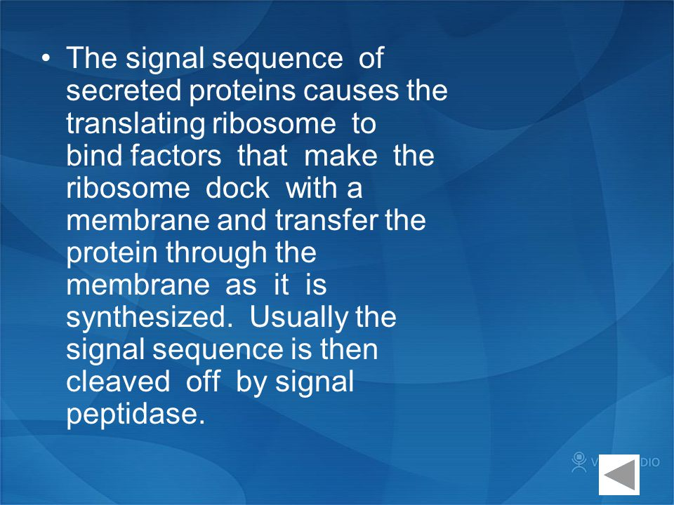 The signal sequence of secreted proteins causes the translating ribosome to bind factors that make the ribosome dock with a membrane and transfer the protein through the membrane as it is synthesized.