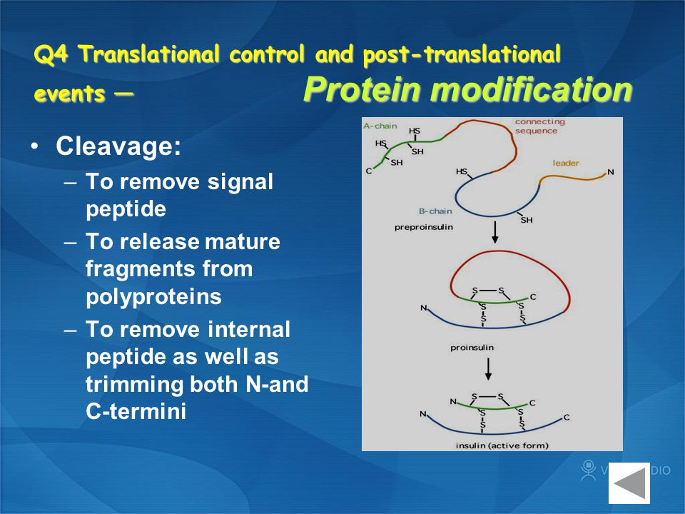 Q4 Translational control and post-translational events — Protein modification
