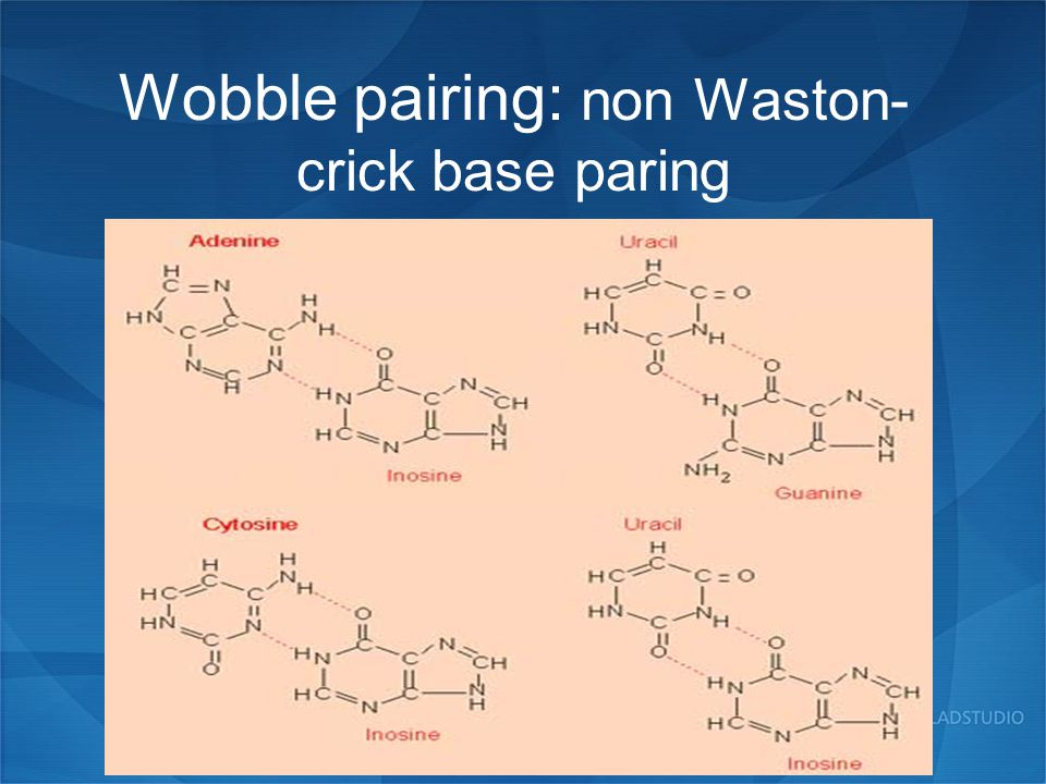 Wobble pairing: non Waston-crick base paring