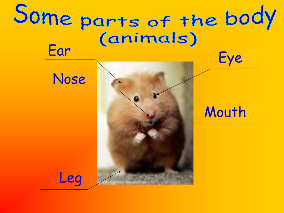 Some parts of the body (animals) Ear Eye Nose Mouth Leg