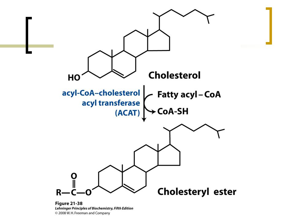 FIGURE 21-38 Synthesis of cholesteryl esters