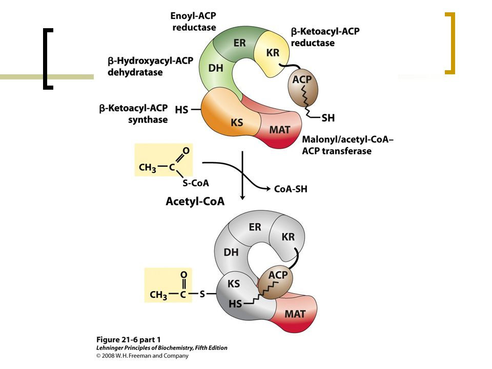 FIGURE 21-6 (part 1) Sequence of events during synthesis of a fatty acid.