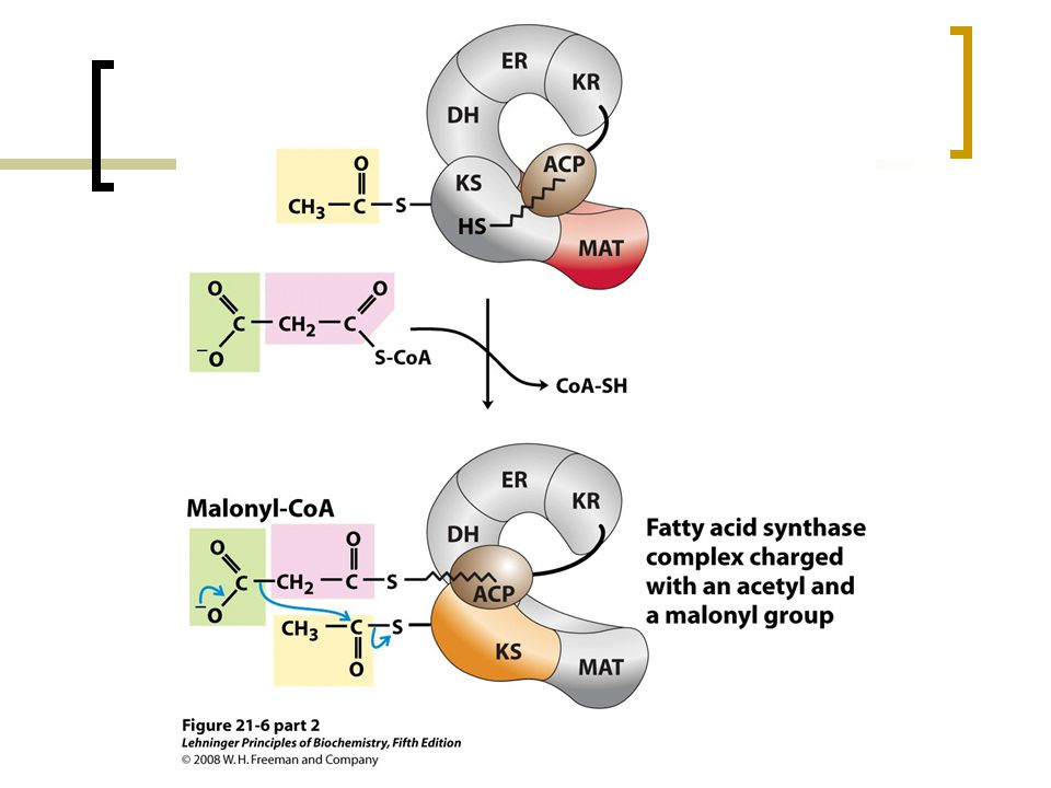 FIGURE 21-6 (part 2) Sequence of events during synthesis of a fatty acid.