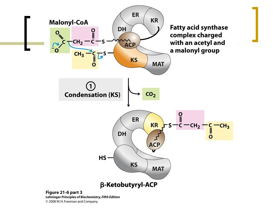 FIGURE 21-6 (part 3) Sequence of events during synthesis of a fatty acid.