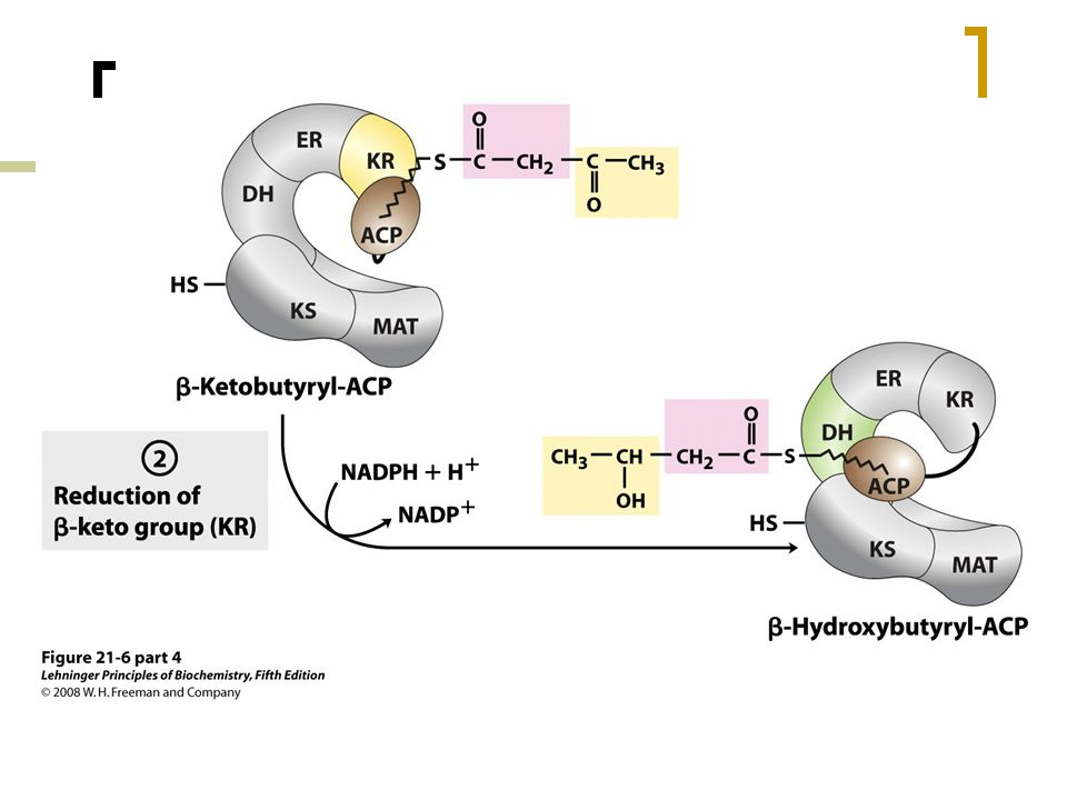 FIGURE 21-6 (part 4) Sequence of events during synthesis of a fatty acid.