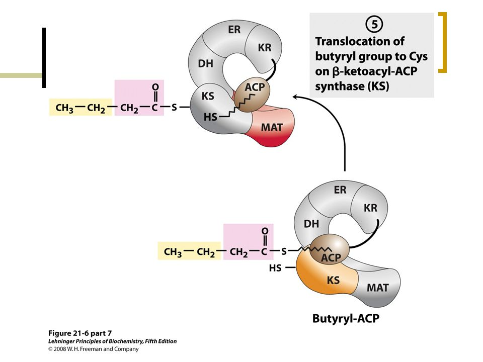 FIGURE 21-6 (part 7) Sequence of events during synthesis of a fatty acid.