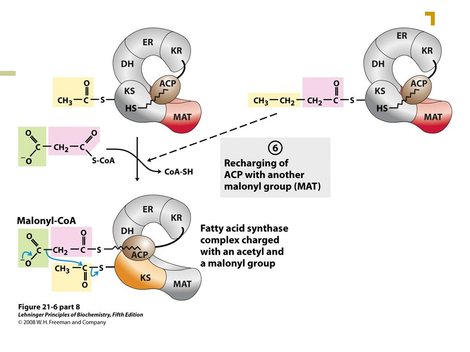 FIGURE 21-6 (part 8) Sequence of events during synthesis of a fatty acid.
