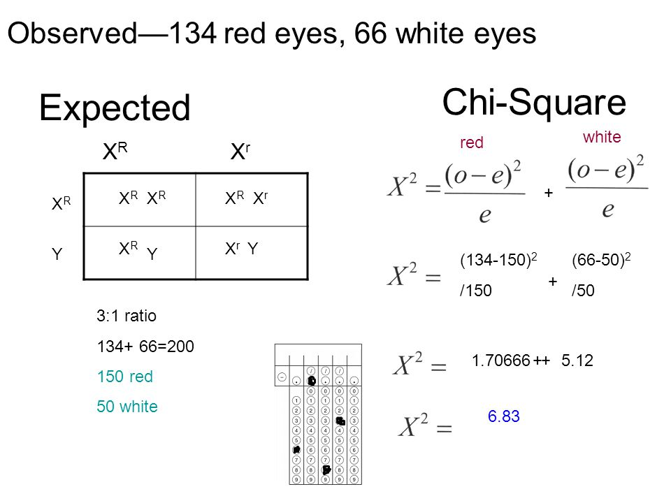Chi-Square Expected Observed—134 red eyes, 66 white eyes XR Xr white