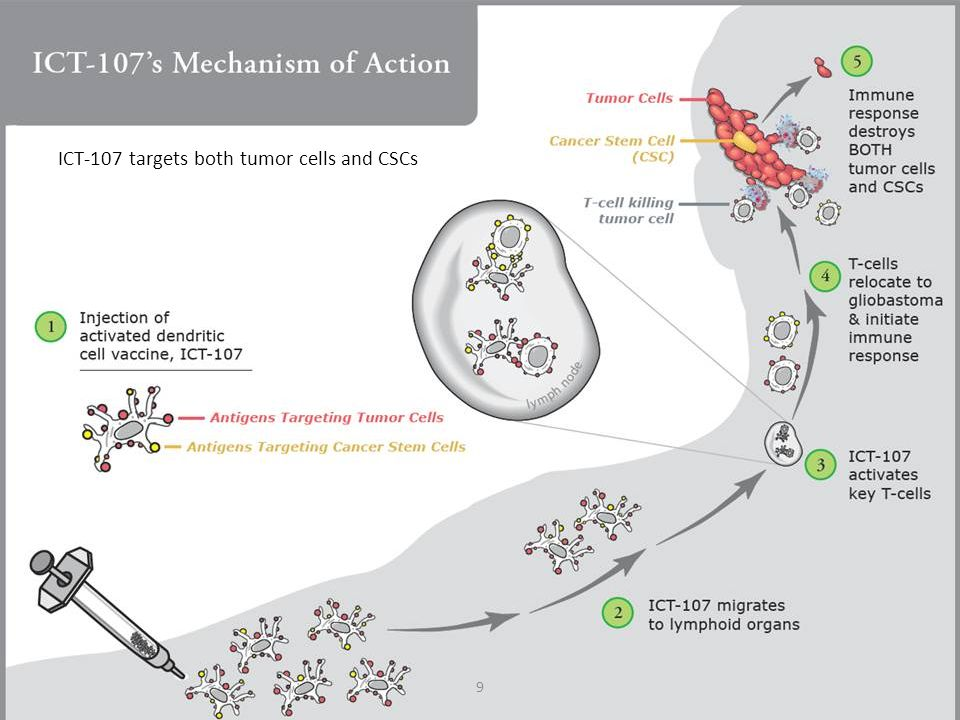 ICT-107 targets both tumor cells and CSCs