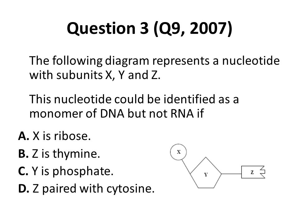 Question 3 (Q9, 2007) The following diagram represents a nucleotide with subunits X, Y and Z.