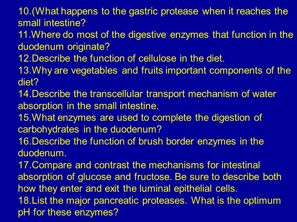 10.(What happens to the gastric protease when it reaches the small intestine