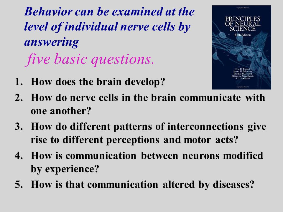 Behavior can be examined at the level of individual nerve cells by answering five basic questions.