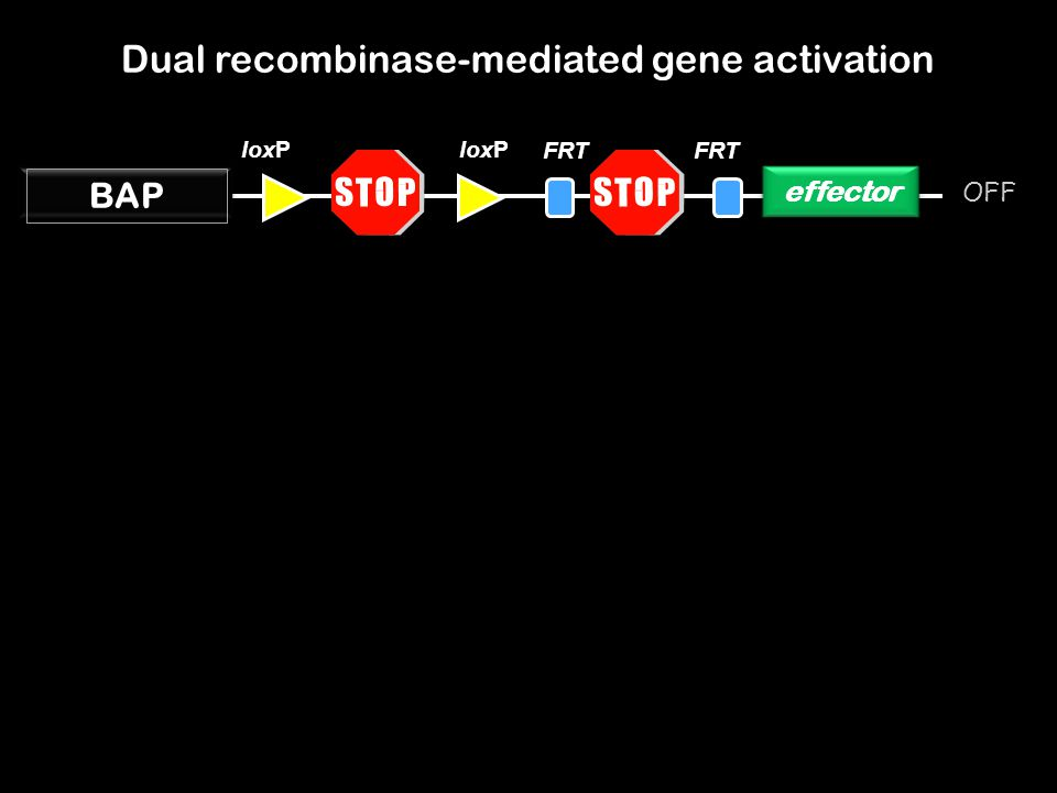 Dual recombinase-mediated gene activation