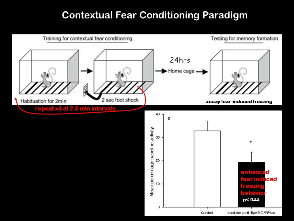 Contextual Fear Conditioning Paradigm