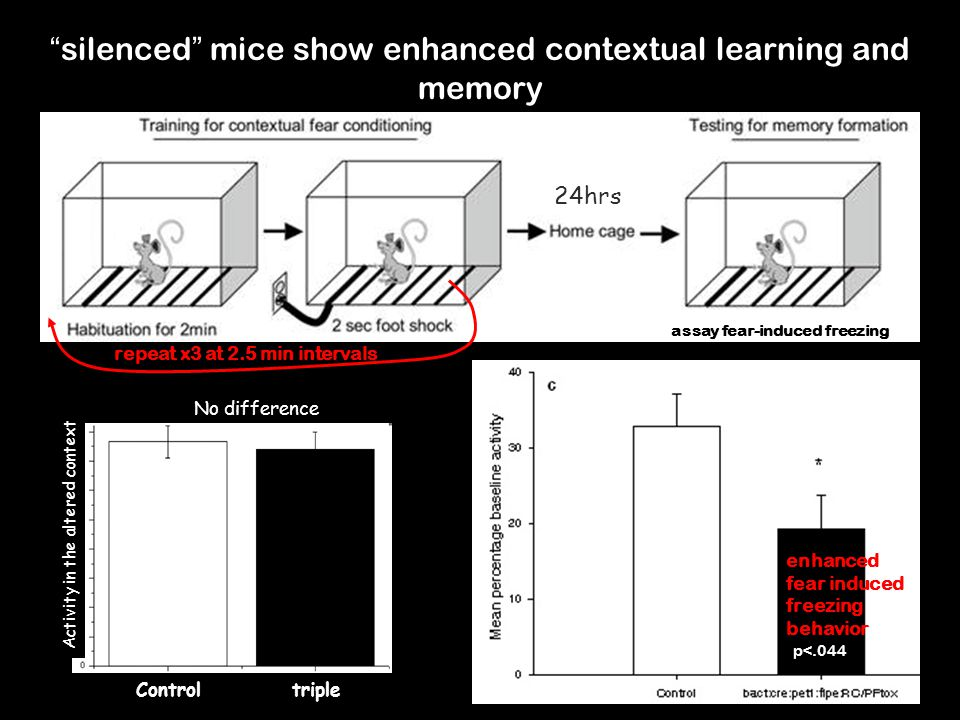 silenced mice show enhanced contextual learning and memory