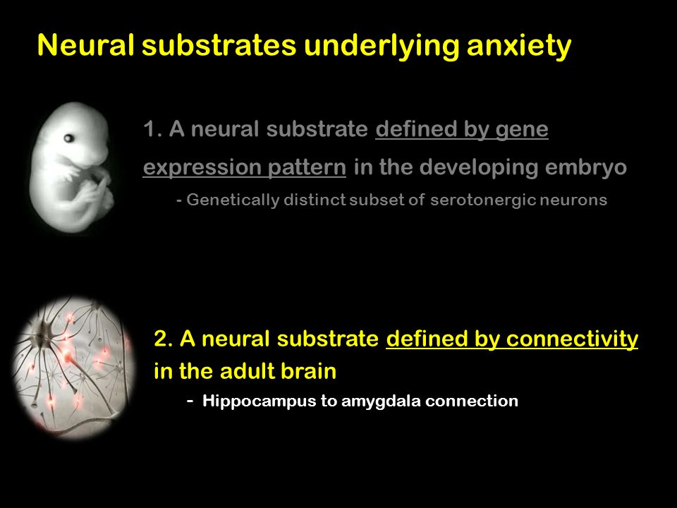 Neural substrates underlying anxiety