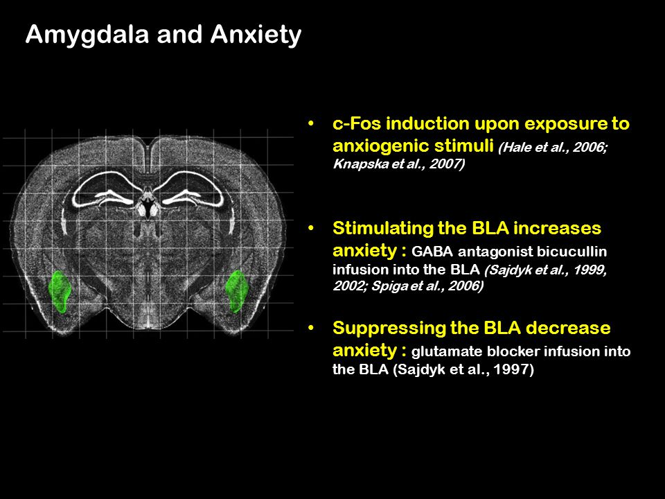 Amygdala and Anxiety c-Fos induction upon exposure to anxiogenic stimuli (Hale et al., 2006; Knapska et al., 2007)