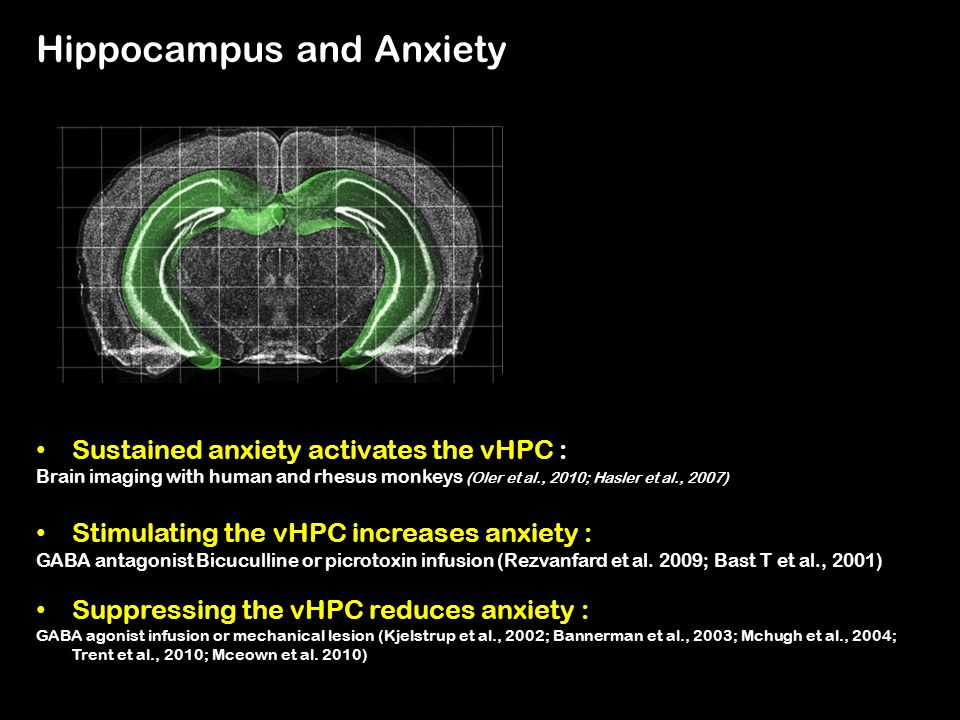 Hippocampus and Anxiety