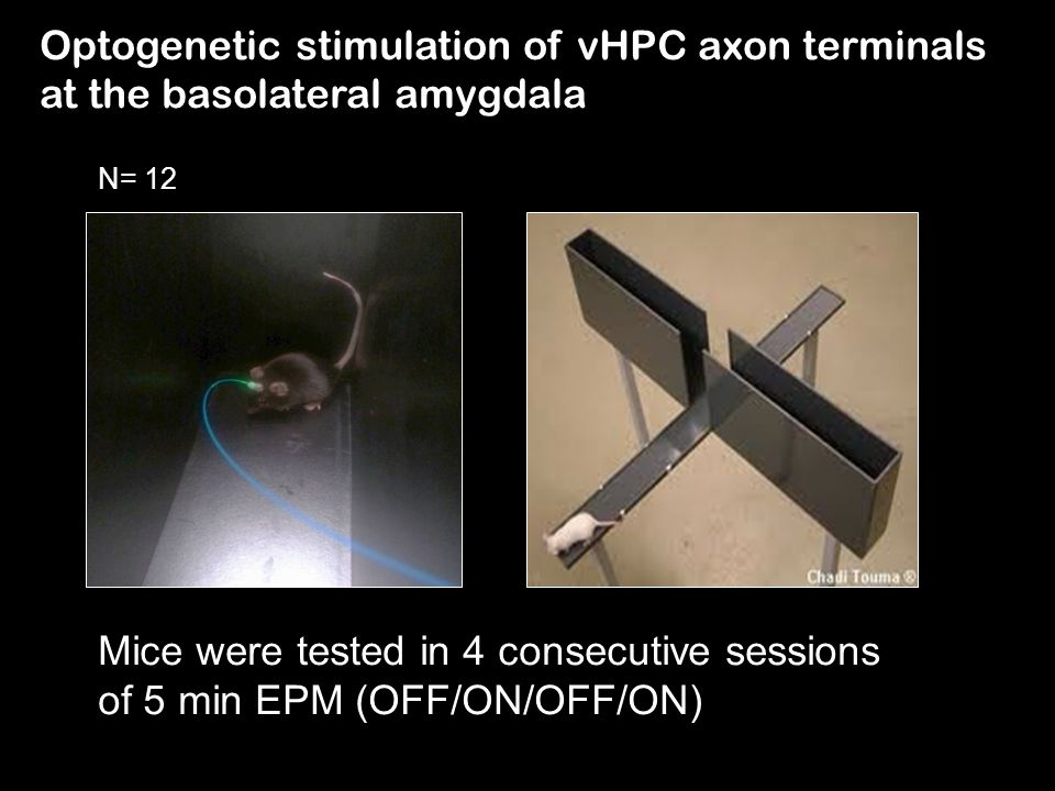 Optogenetic stimulation of vHPC axon terminals at the basolateral amygdala