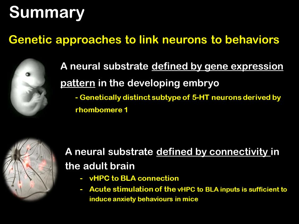 Summary Genetic approaches to link neurons to behaviors