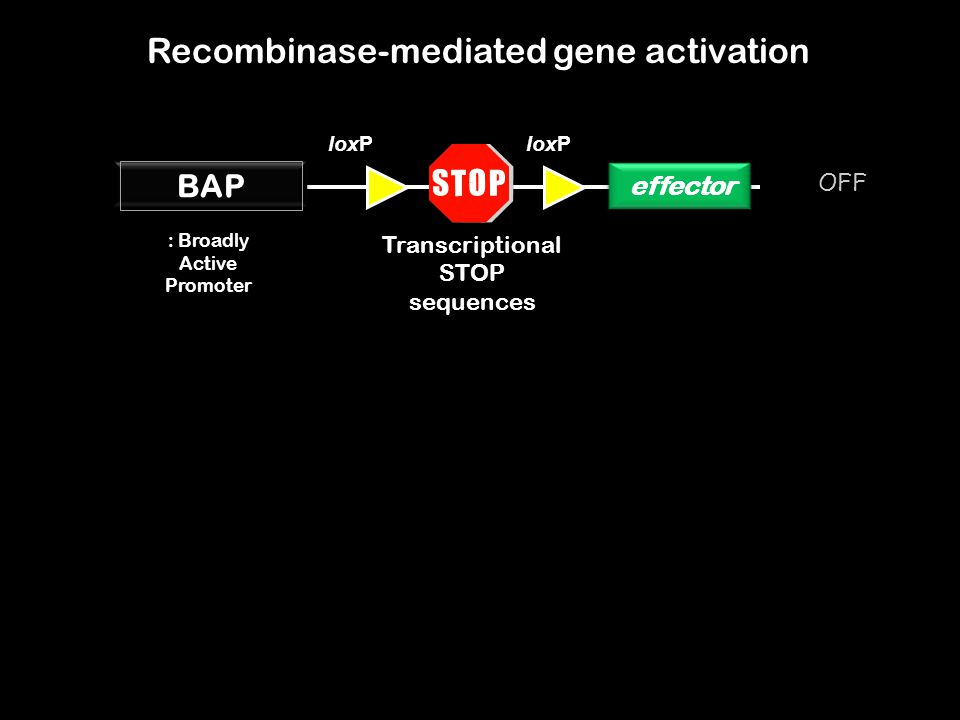 Recombinase-mediated gene activation