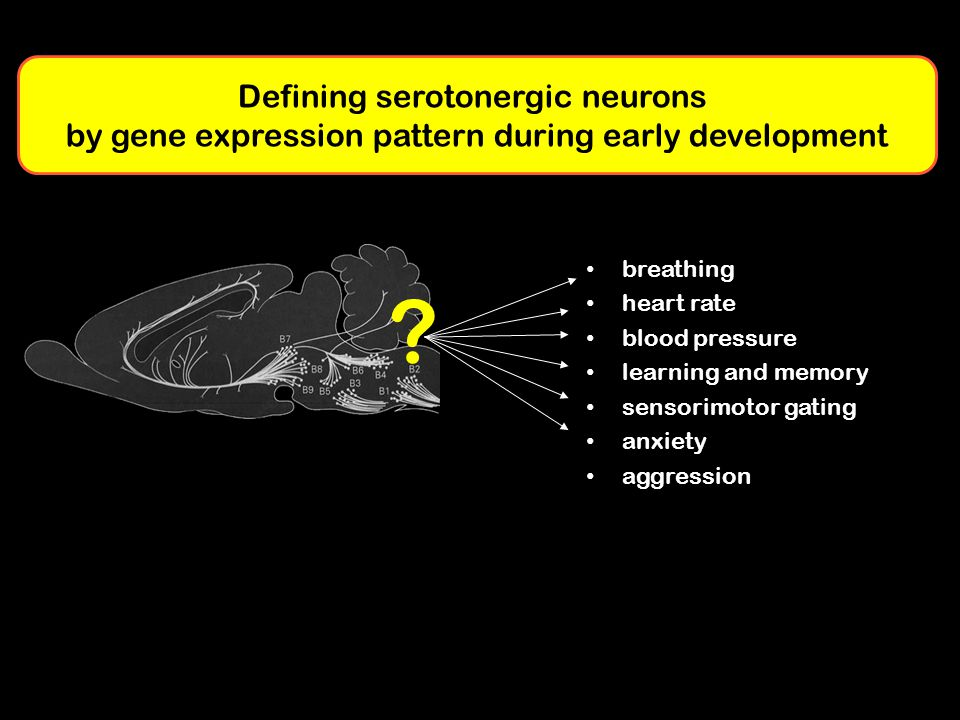 Defining serotonergic neurons