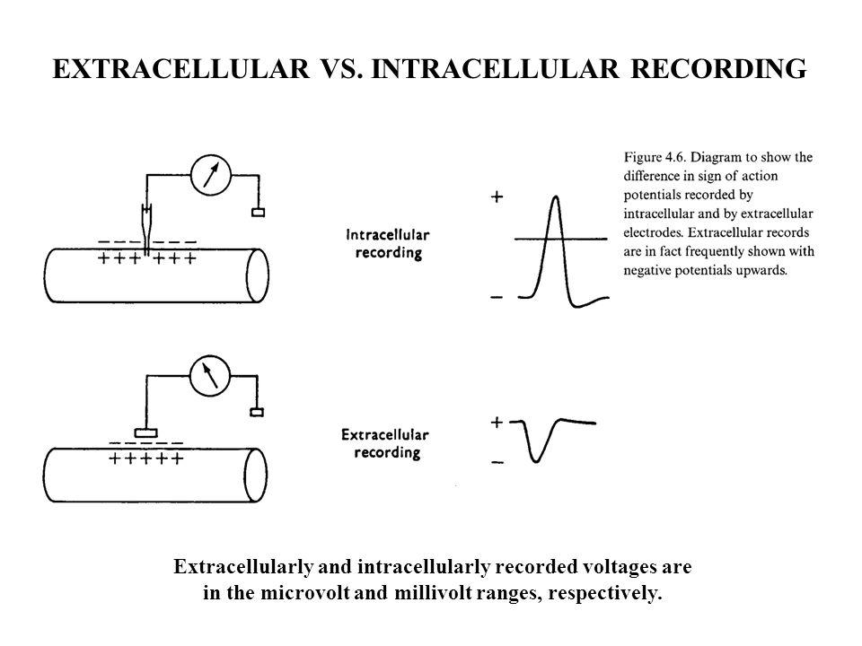 EXTRACELLULAR VS. INTRACELLULAR RECORDING