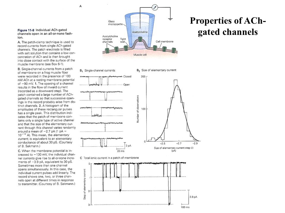 Properties of ACh-gated channels