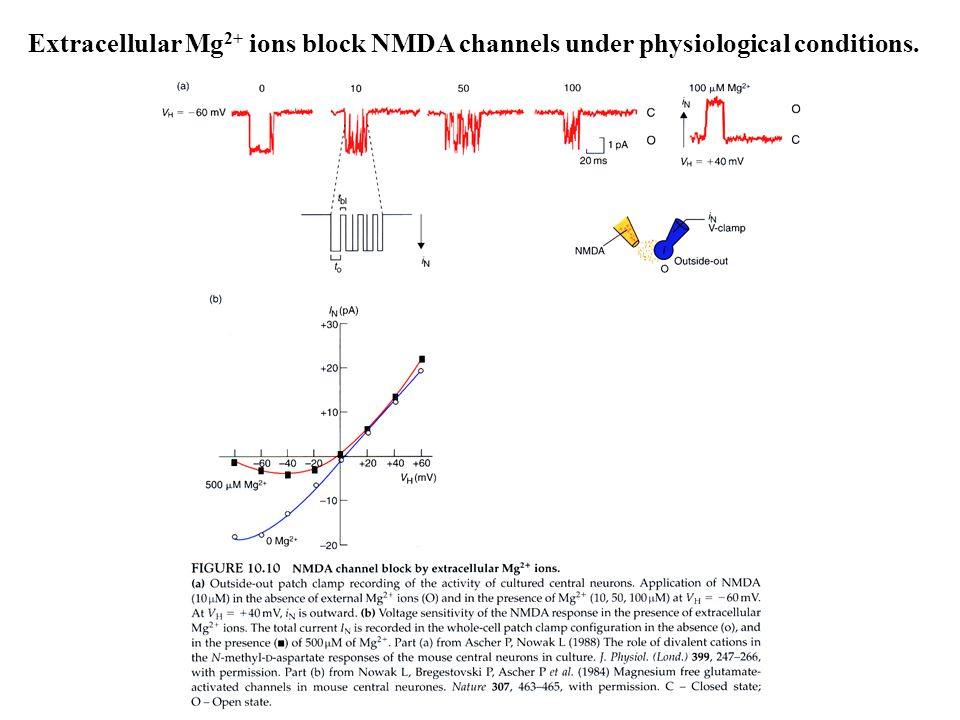 Extracellular Mg2+ ions block NMDA channels under physiological conditions.